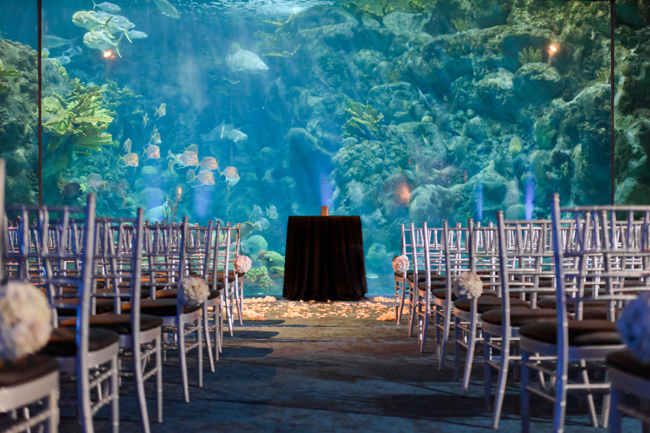 Fab-You-Bliss-Wedding-Blog-Sarah-Ben-Aquarium-Wedding-09